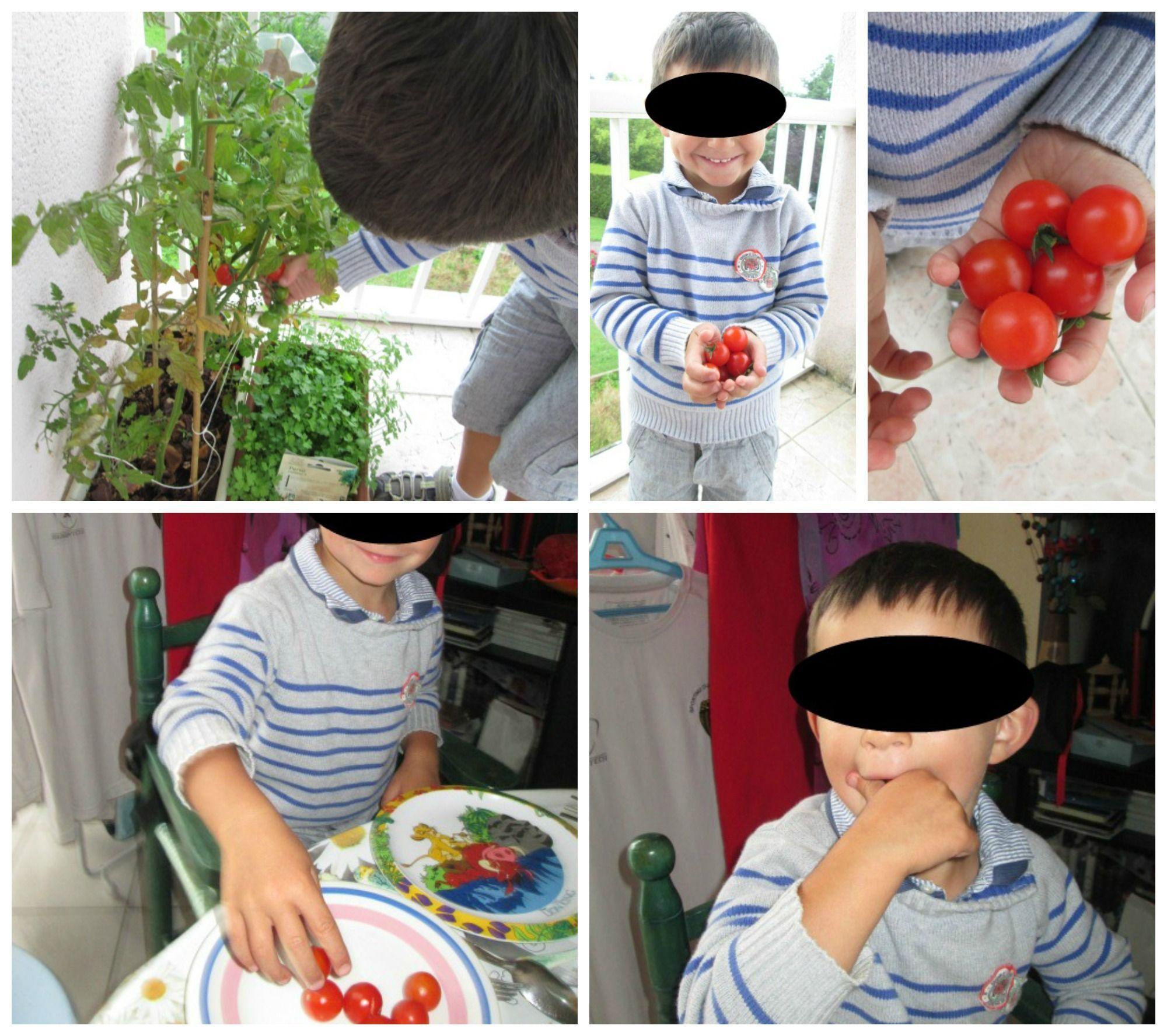 Repas page 4 - Quand planter les tomates cerises ...