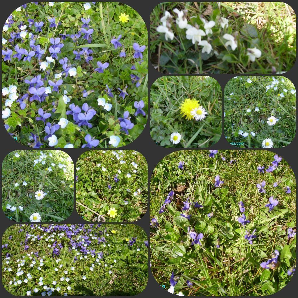Les fleurs de printemps for Fleurs jardin printemps